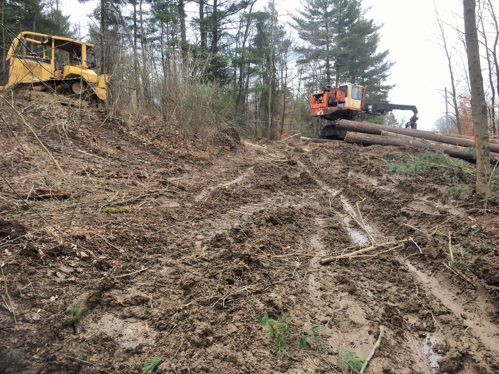 "Soil compaction, rutting and root damage from logging activities on ""soft"" ground carry serious consequences that can affect the health and growth of remaining trees for years."