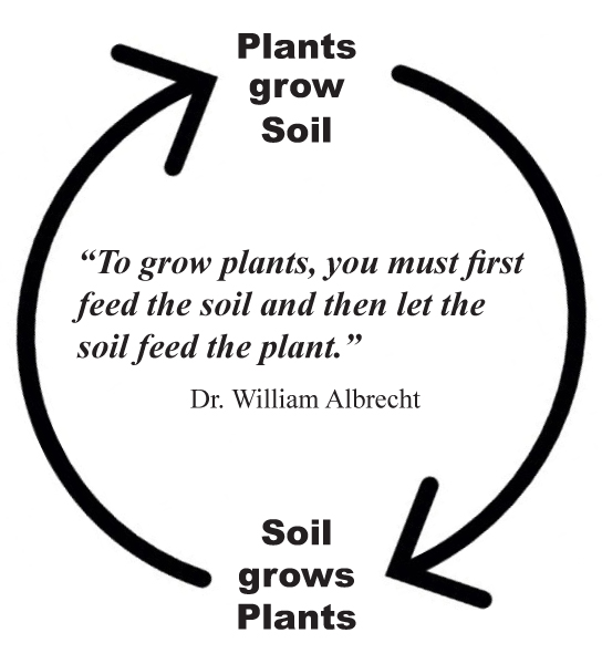 Plants-grow-Soil.jpg