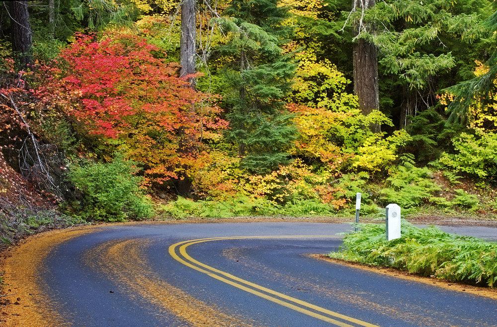 autumn-background_fk4VN2D_.jpg