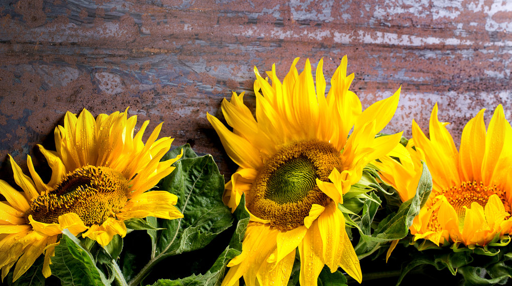 sunflowers-gods-favor-walking-on-sunshine.jpg