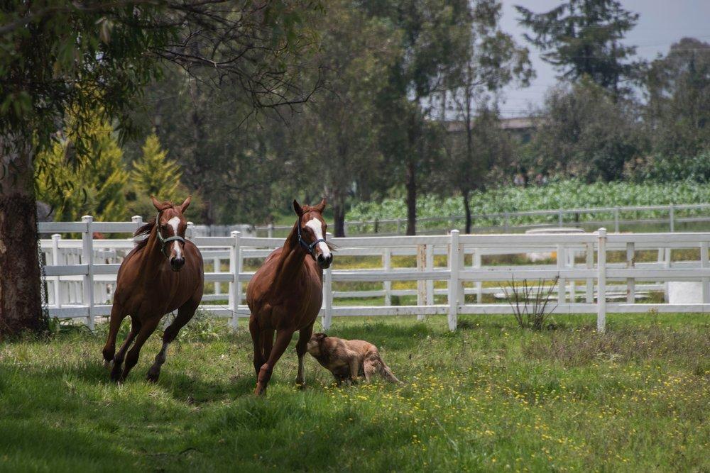 running-horses.jpg