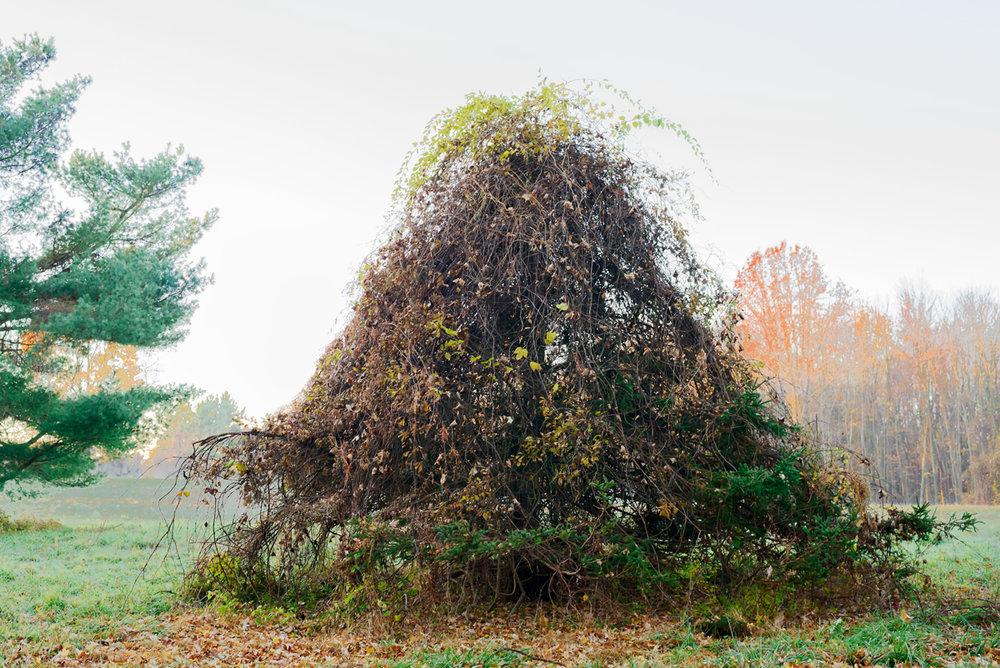 Invaded Spruce, November 2016