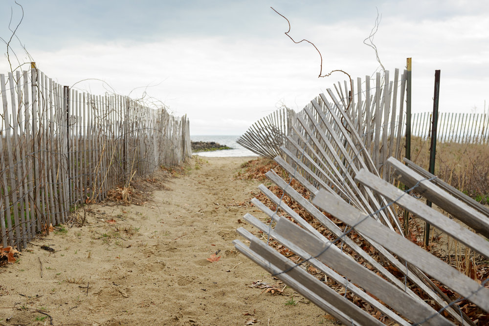 Invaded Beach Fence, April 2016