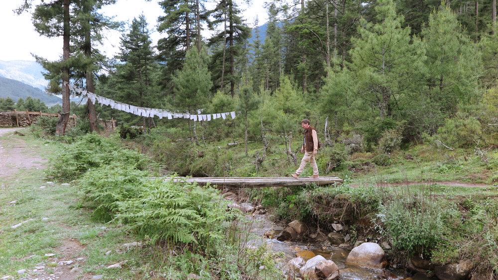 Bhutan crane 1.jpg