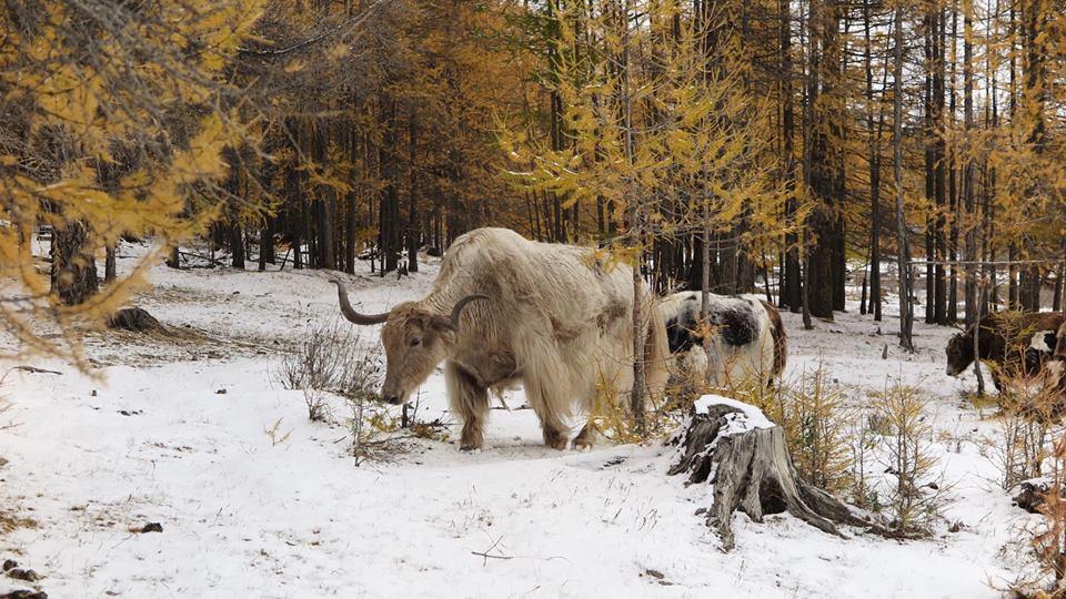 Mongolia 25.jpg