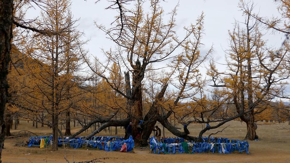 Mongolia 41.jpg