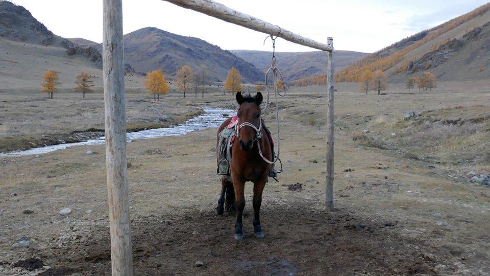 Mongolia 40.jpg