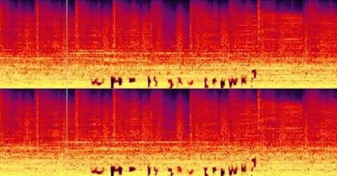 Find this hidden spectrogram on Yellow Cake and win a free copy of the album! #whoissambrown #yellowcake DM me your answers.
