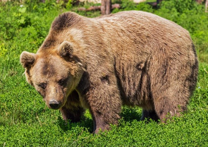 8 12 bear.JPG