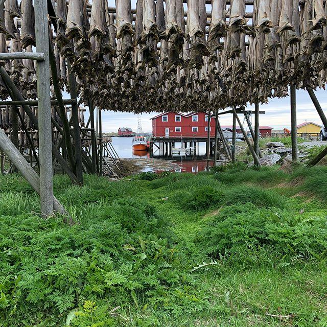 Lagt utti havet ligger Røst. Ziprace spiser lunsj på Skomværskroa.  #ziprace #ravenrib #lofoten #røst