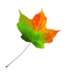 leaf-changing-color.jpg