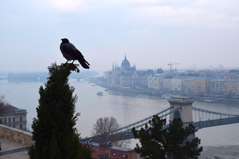 birdandbudaparliament.jpg