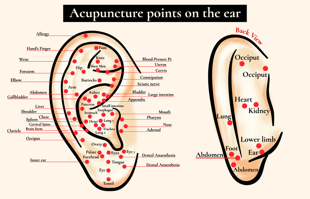 Ear microsystem - it provides a map to all parts of the body and physiology; other microsystems, like for the hand, do just the same thing
