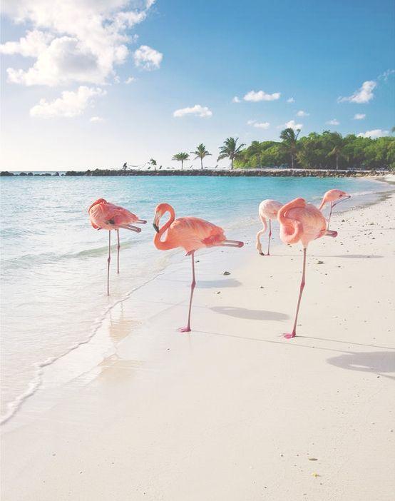 flamingo beach fenicotteri rosa spiaggia