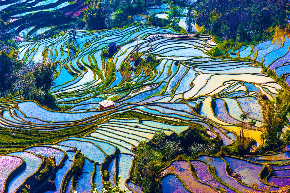 (Terrazzamenti per la coltivazione del riso)