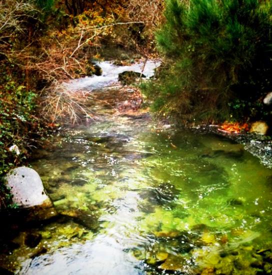 An emerald river in Galicia
