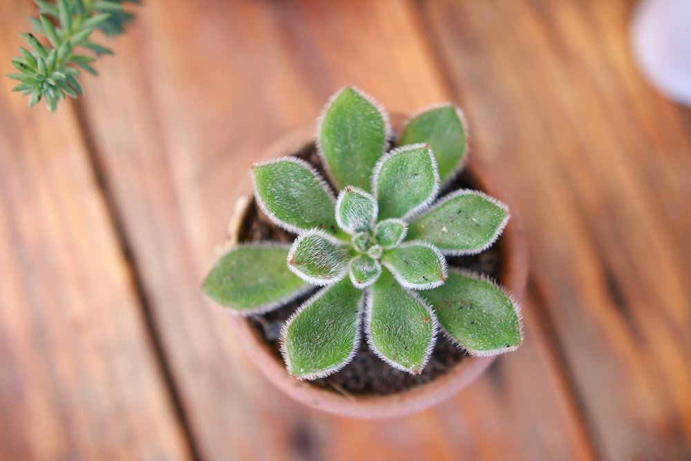 little-plant-1836817_1920.jpg