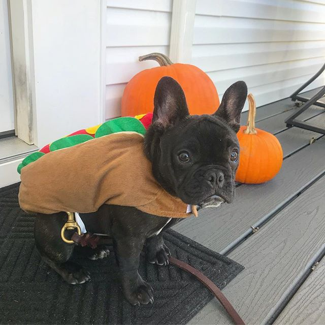 Happy Halloween 🎃 Maggie wanted to be something sexy so I made her a hot dog 🌭