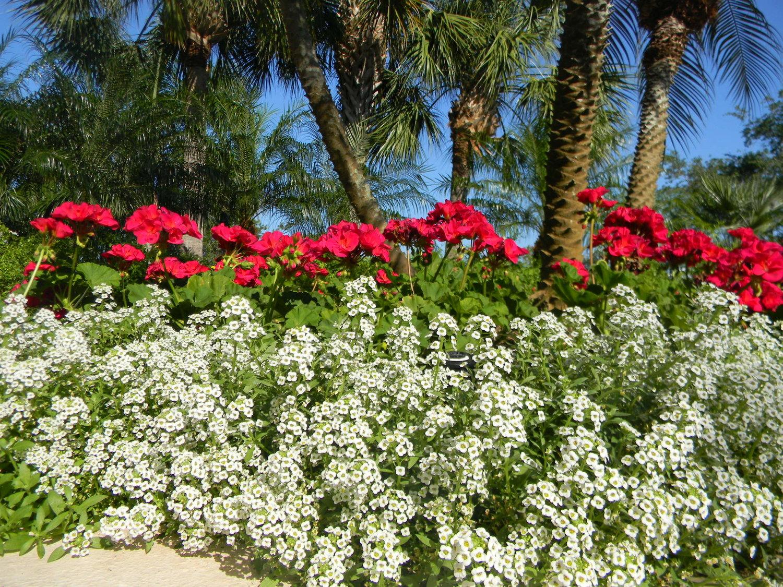 Summer landscaping tips for southwest florida crawford landscaping izmirmasajfo