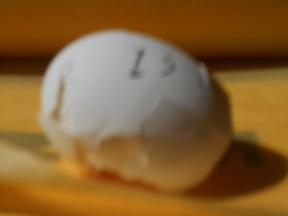"""""""Broken Egg 13,""""photograph, 2015 [Image Description: An out-of-focus photograph of a broken egg with the number 13 written in black on the shell. The egg rests on a surface that is gold in color and a brown wall is visible behind it.]"""