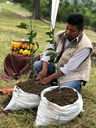 Farmer planting oranges.jpg