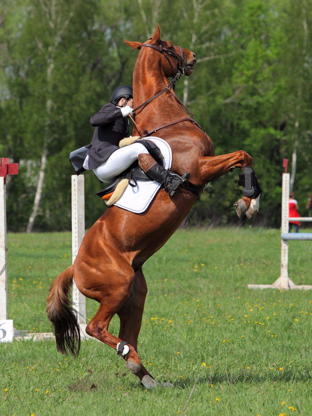 Is your horse experiencing pain?
