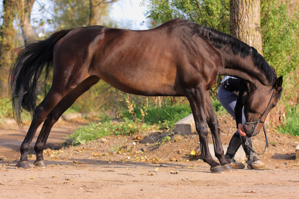 Injury Prevention - Horse - JHHPhysiotherapy