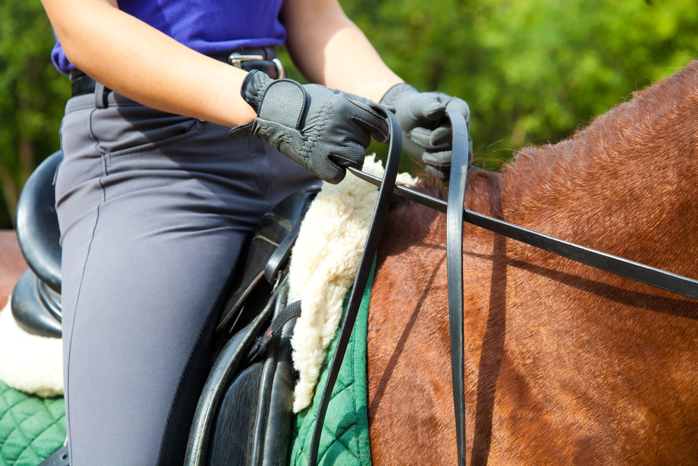 Learn more here about the equestrian team...