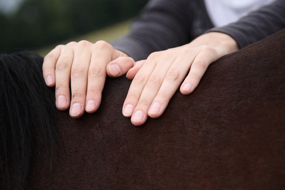 Pre and post surgery - Equine - JHHPhysiotherapy