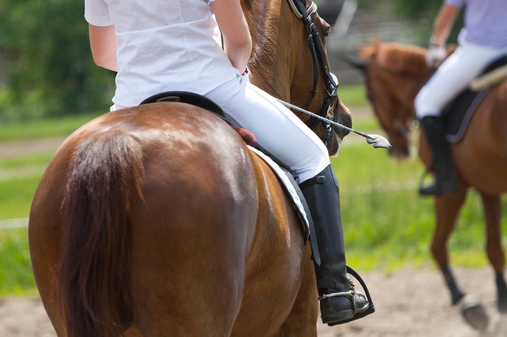 Horse & Rider Physiotherapy - Weight Distribution - JHHPhysiotherapy