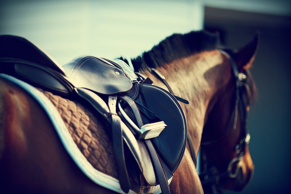 Horse & Rider Physiotherapy - Saddle Fit - JHHPhysiotherapy