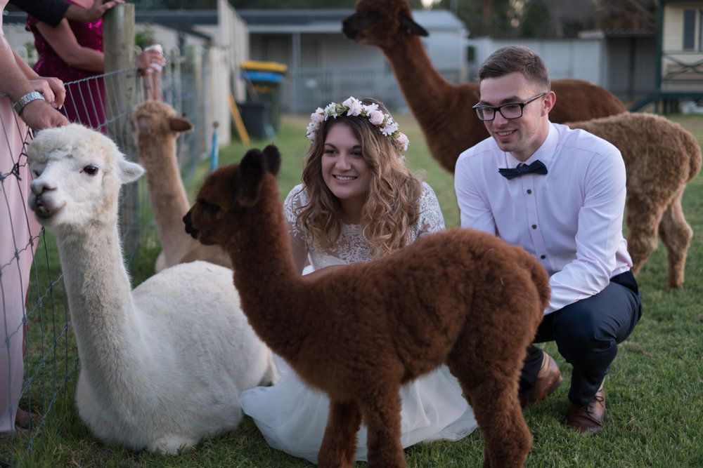 Hire a petting zoo instead of bonbonierres for your guests! It's a guaranteed win.