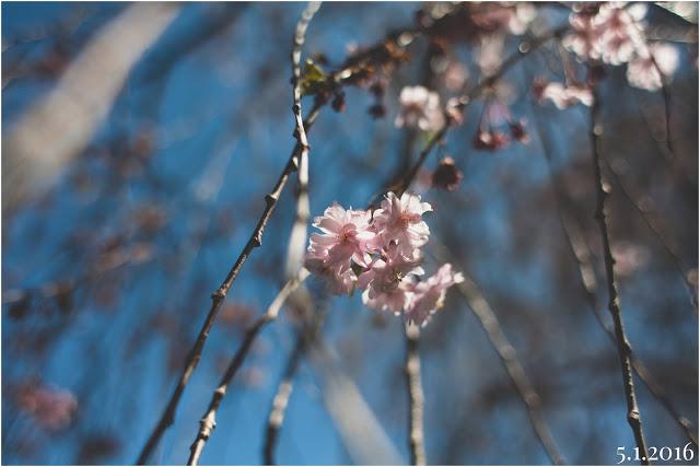 Photo May 02, 12 39 44 PM.jpg