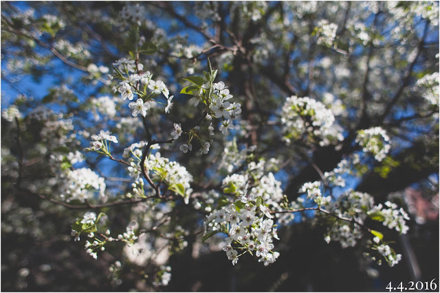 Photo Apr 10, 5 10 44 PM.jpg