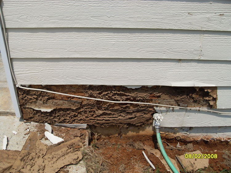 termite+damage+6.jpg