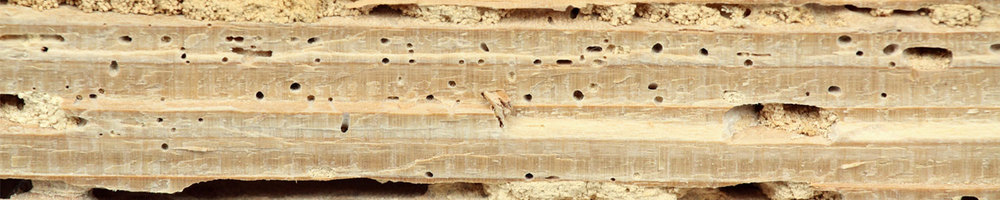 Termite-Damage-Repair2.jpg