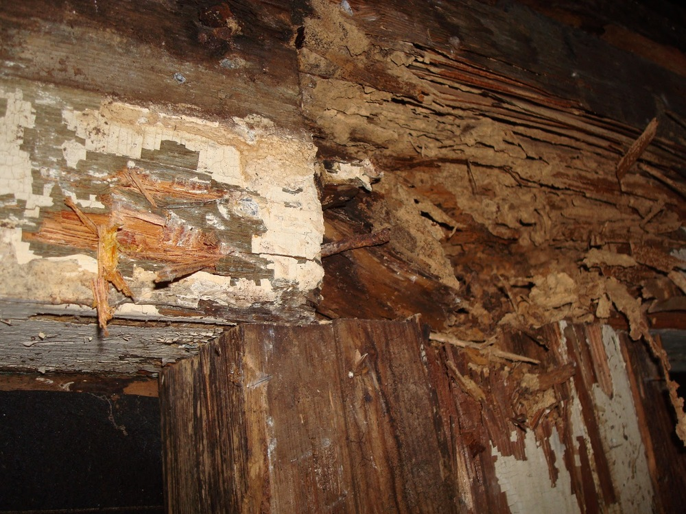 termite-damage-in-walls.jpg