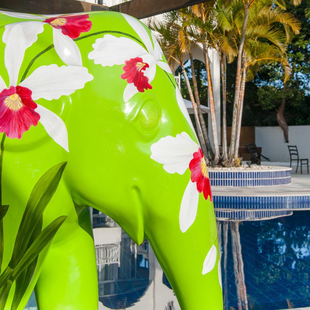 Hotel-Torres-da-Cachoeira-Elephas-purpurata-por-Lu-Mori1.jpg