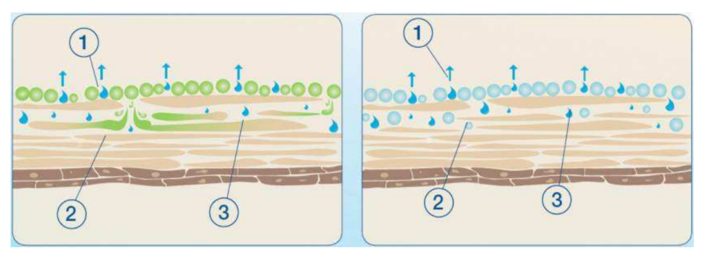 On the left, you can see that plant based oils sit on top of the skin but also penetrates and therefore acts to nourish the skin. On the right, the diagram shows how mineral oil will just sit on the top layer of the skin preventing water loss.  Image Source: http://www.probotanic.com/