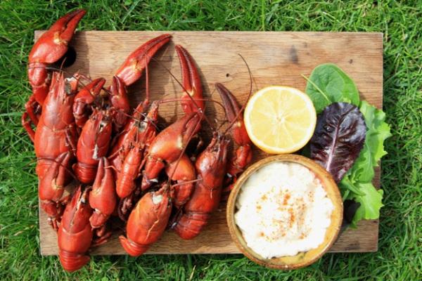american-signal-crayfish.jpg