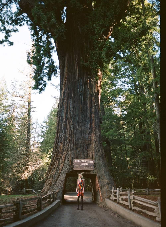 IvanaHelsinki-Trees2019-Midge-11.jpg