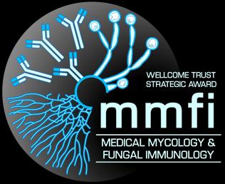 mmfi-logo-dark.png