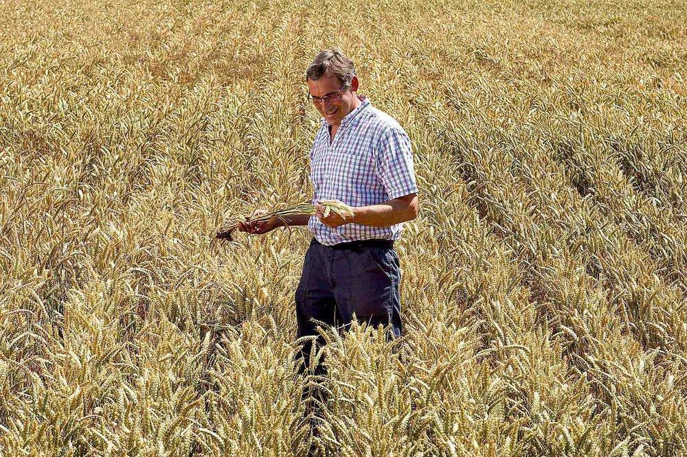 Kevin Mallett Man In a Cornfield