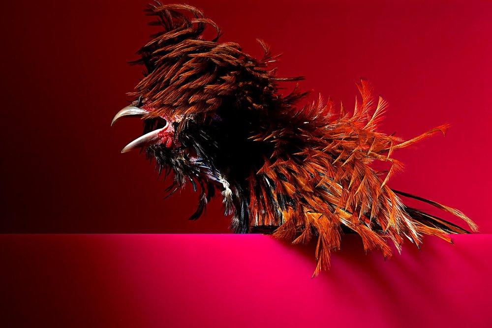 Kevin Mallett Bird Plume