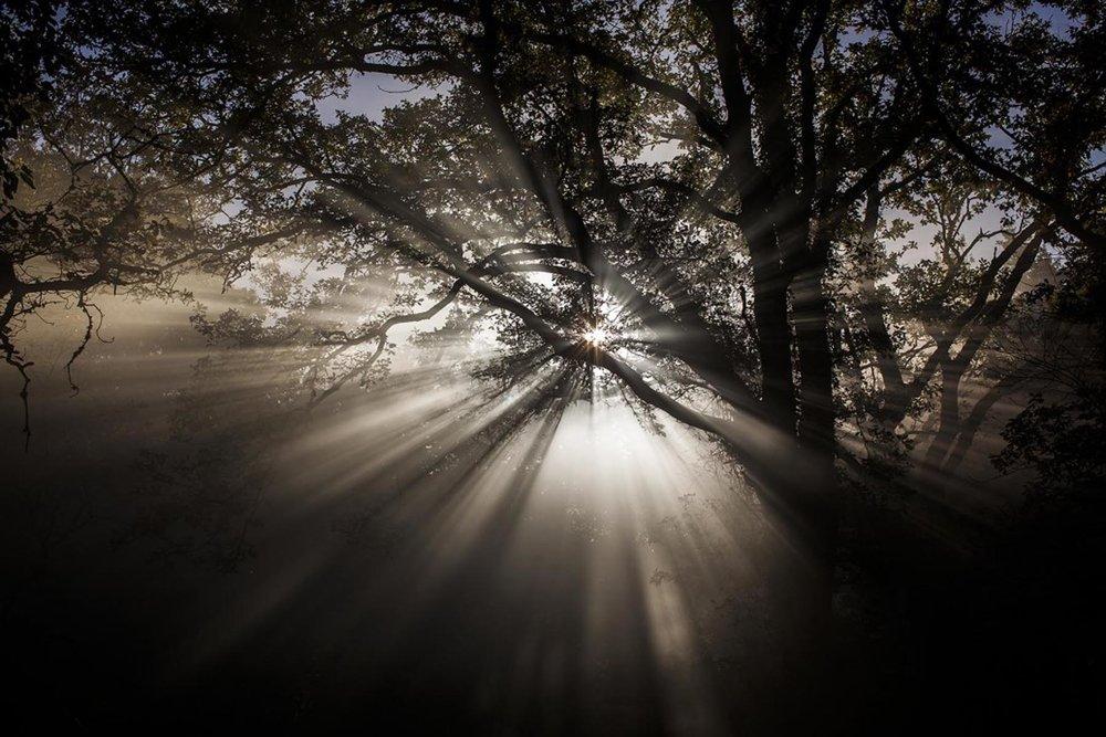 Richard Wadey Light Through the Trees