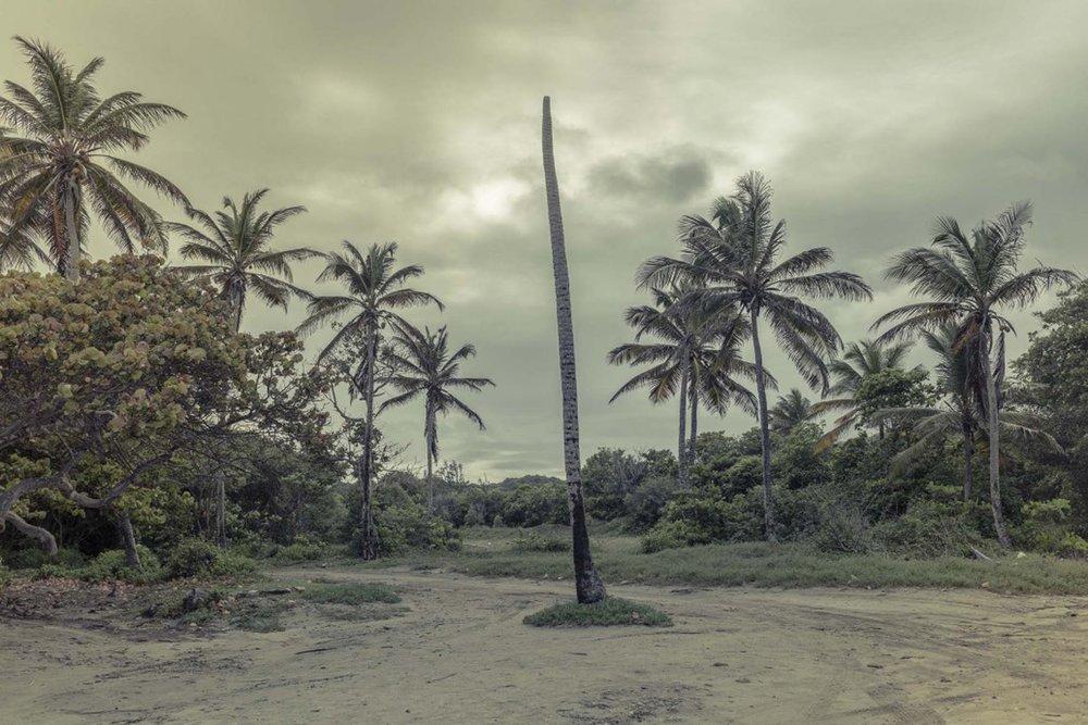 Richard Wadey Palm Trees