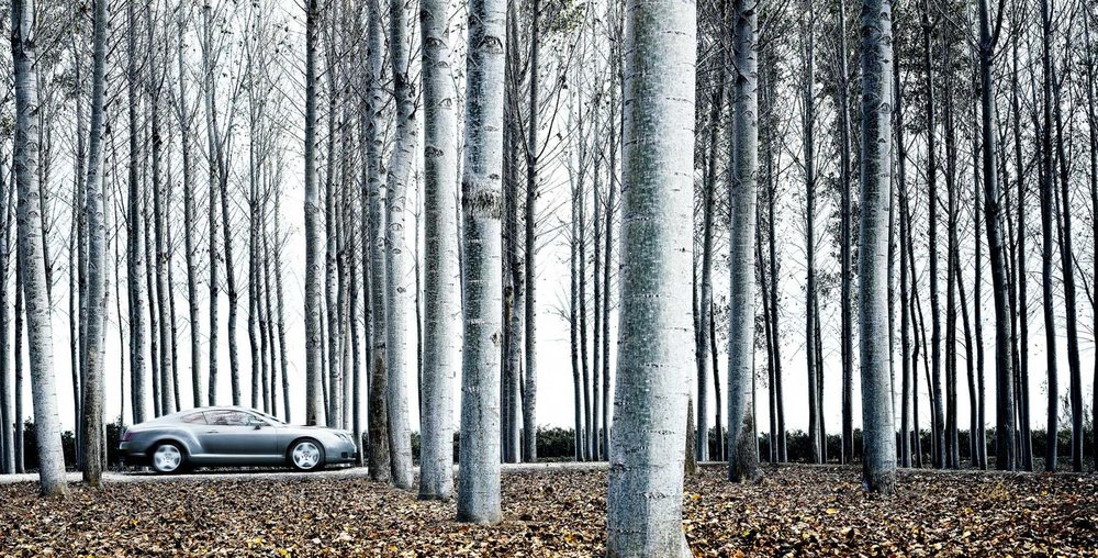 Nigel Harniman Silver Car & Silver Birch Trees