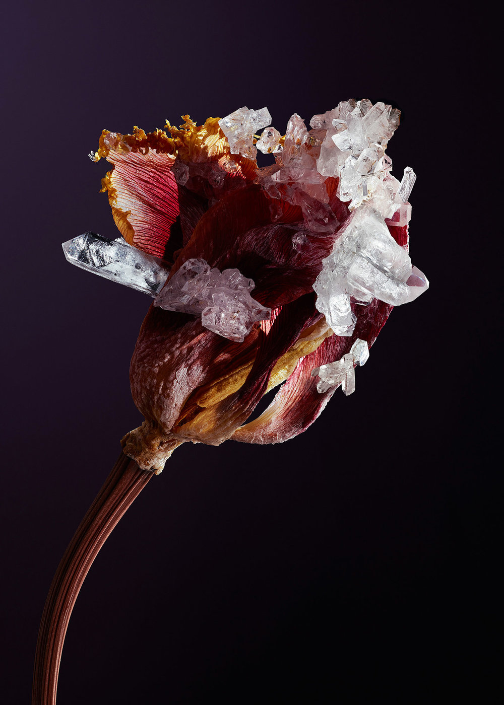 Tal Silverman Pink Flowerbud