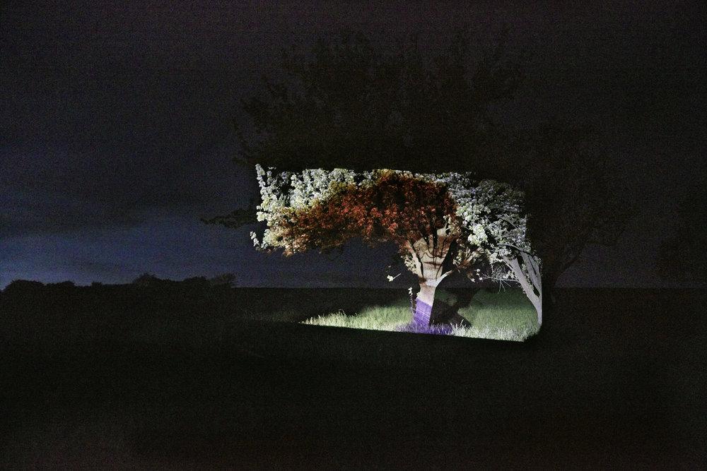 Anatol de cap Rouge - Fleurs - trees