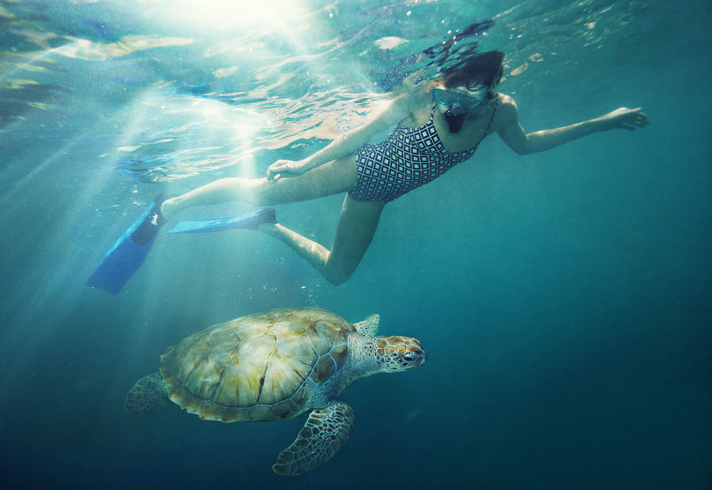 Karan Kapoor people snorkeling with turtle